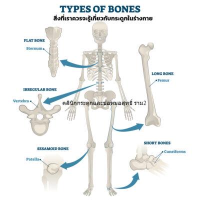 สิ่งที่เราควรจะรู้เกี่ยวกับกระดูกในร่างกาย